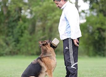 élagage chien